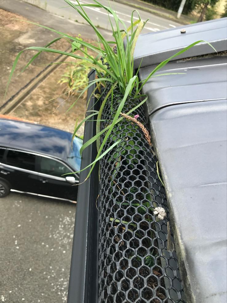 雨樋の落ち葉除けネットをつけていても草が生えている写真
